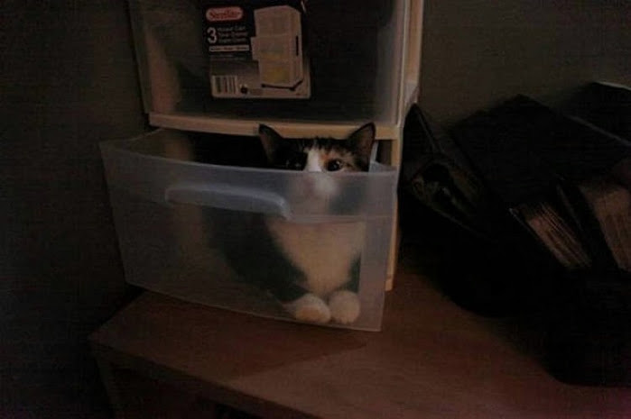 hidingcats08 (700x465, 130Kb)