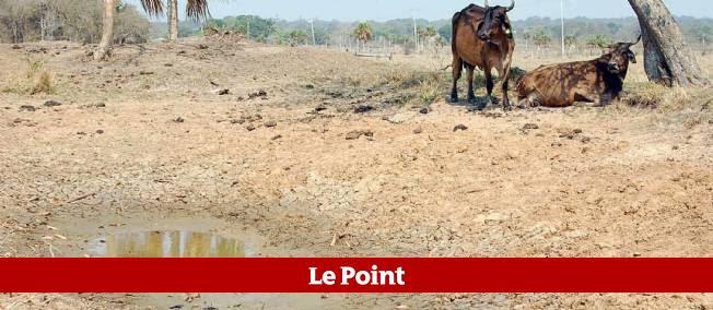 La sécheresse sévit depuis des dizaines d'années au Mexique. Le procédé inventé par l'ingénieur Sergio Rico pourrait y remédier.