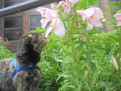 Recently, Tortoise Cat...!?
