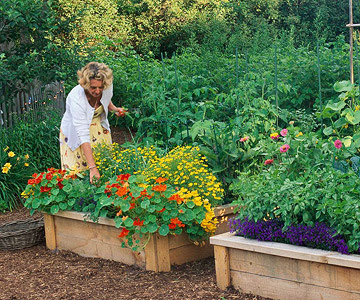 raised garden beds plans | How To Build A Raised Garden Bed