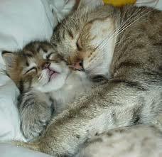 Inilah sebabnya, Rasulullah sukakan kucing