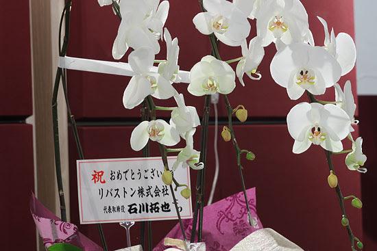 胡蝶蘭 花言葉