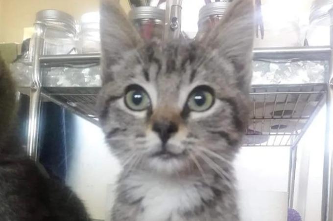 Rescatistas encuentran a un gatito callejero siendo ayudado por un amigo improbable