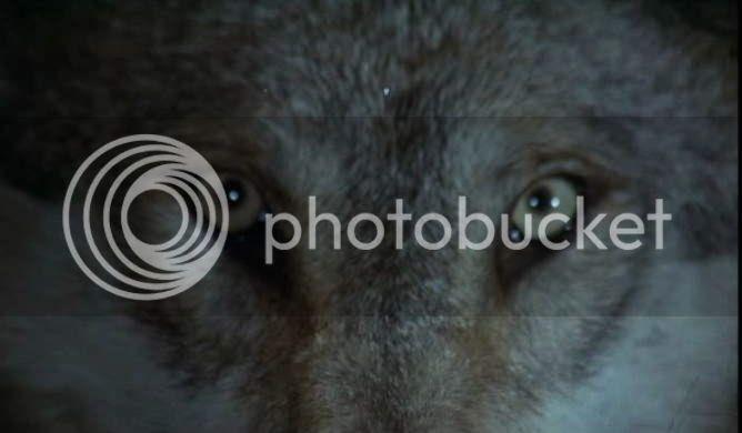 photo cap_arbre_noel-3.jpg