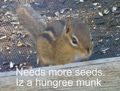 Needs more seeds Iz a hungree munk