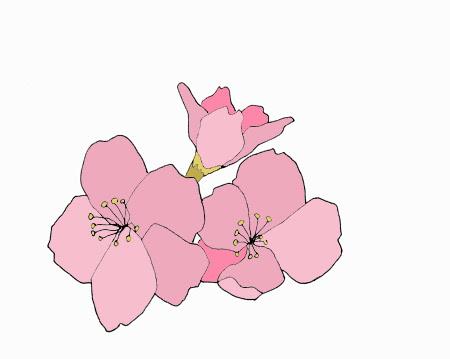 How to Draw Manga Flowers | eHow UK