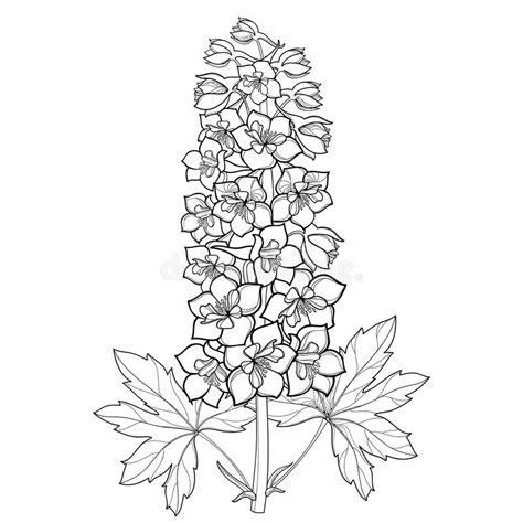 Delphinium Flower Coloring Page