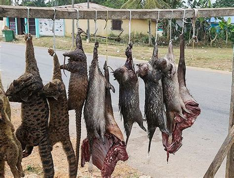 Bush Meat Trade threatens hundreds of Species with Extinction   Earthrace Conservation