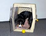 pflege f r hunde hund trainingsplan alleine bleiben hund. Black Bedroom Furniture Sets. Home Design Ideas