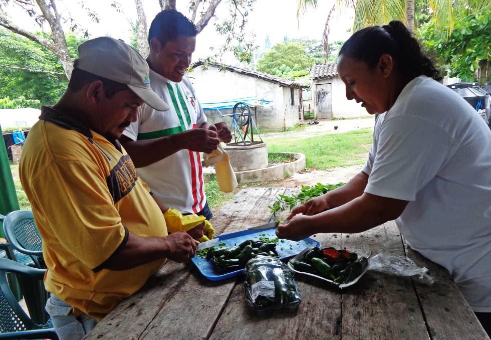 Elaboración de abono orgánico en El Salvador.