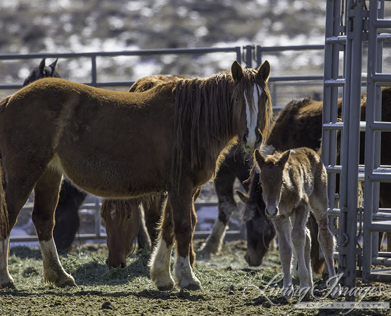 The other newborn foal with its mother