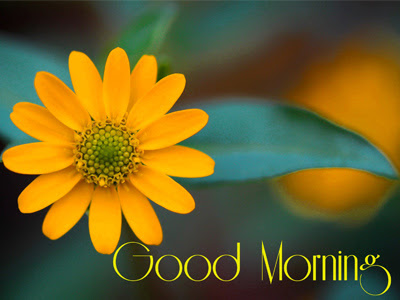 Yellow Flower Gud Morning Pictures For Whatsapp And Facebook Good