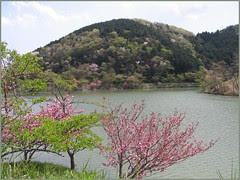 009 blossoms lake mountain