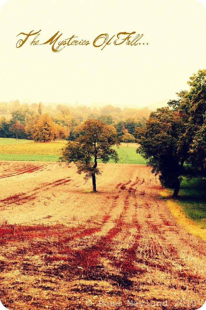 Fall Walk 3.1 bis