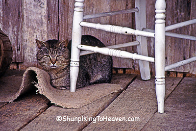 Tiger Cat on the Porch of Penn's Store, Gravel Switch, Casey County, Kentucky