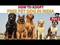 Adoption In India Cost