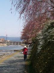 today along kamo river