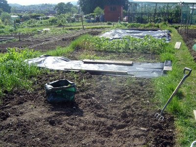 Our allotment.