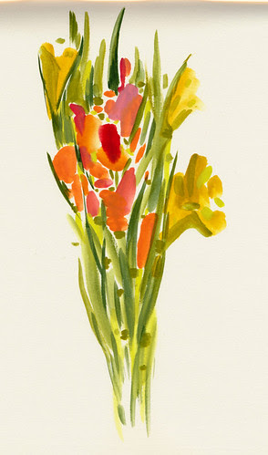 December 2013: Gladiolus - Shape