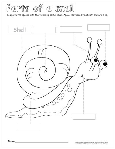parts of snail writing and coloring sheet