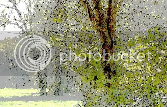 nava,trees,shadowless