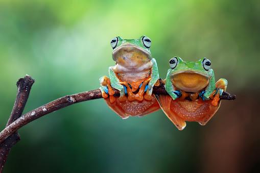 小型のカエルのスマホ壁紙 検索結果 1 画像数3200枚 壁紙com