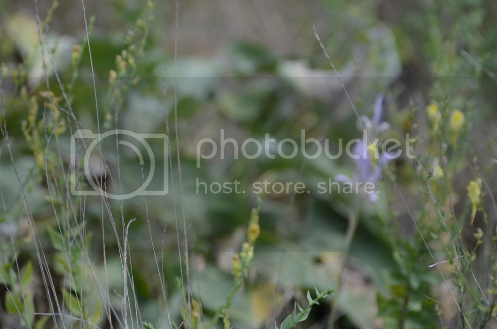 knox mountain kelowna british columbia explore bc