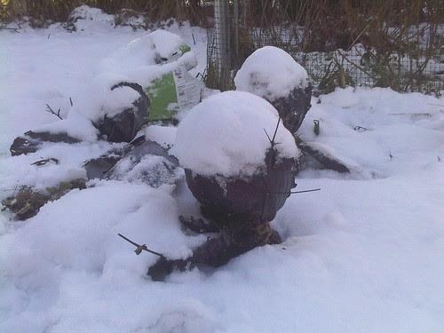 cabbages in snow Dec 09