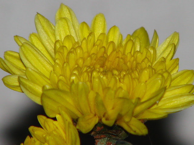 Flowers to be Offered on Daily Basis to Navagrahas or Nine Planets