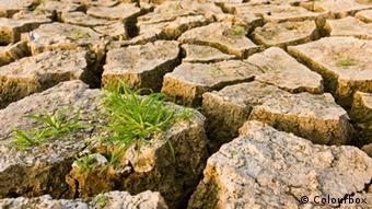 Dürre trockene Erde Gras Klimawandel (Colourbox)