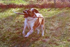 Spaz Dog 8