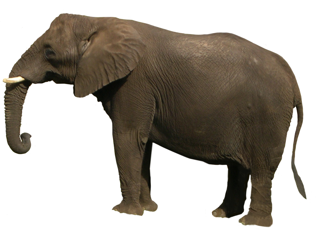 Download Elephant Images Hd Png Png Gif Base Please use search to find more variants of pictures and to choose between available options. download elephant images hd png png