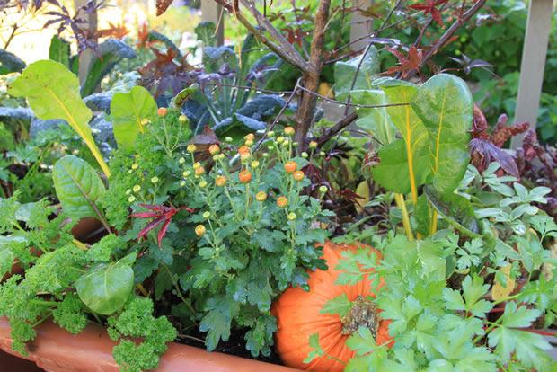 Combinar hortalizas y flores 1