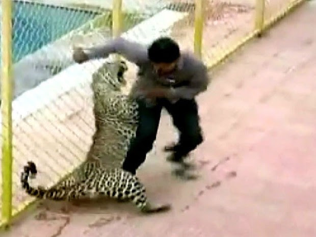 Leopardo invade escola e fere seis pessoas na Índia (Foto: BBC/Reprodução)