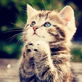Kucing Lucu Suara