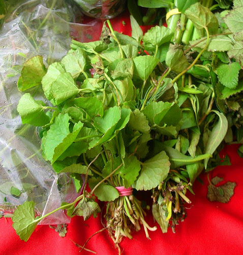 unknown herb