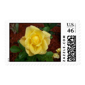 Raindrop Rose Postage stamp