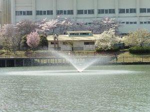 今池親水公園09.JPG