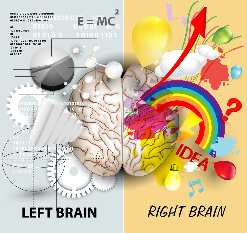 Image result for hemispheres of the brain