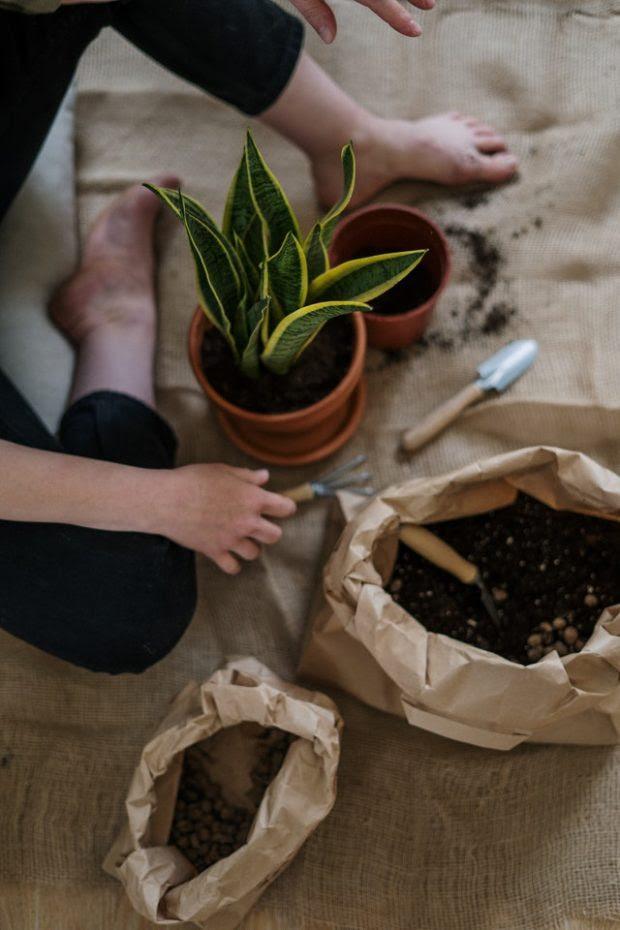 5 Easy Steps to Jumpstart Your Indoor Gardening