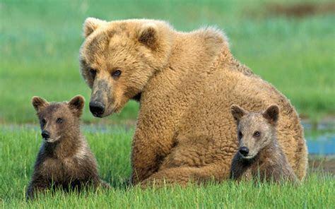 Animal Families   Sierra Club