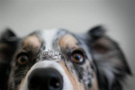 Ring Bearing Dog Steals the Show at Outdoor Wedding