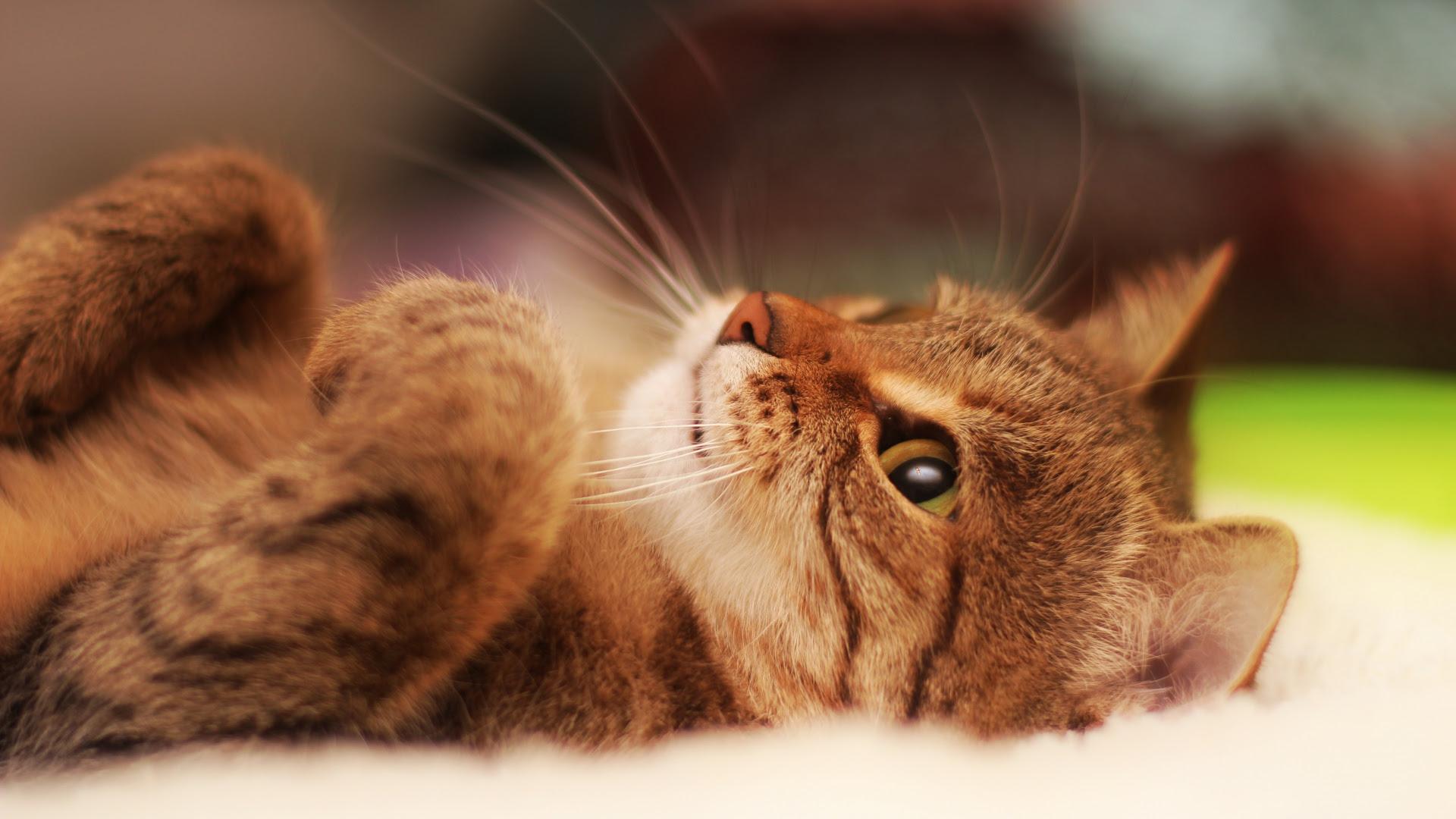 Cute Cat Wallpaper Iphone
