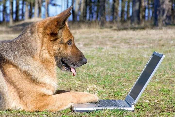 Capas para Facebook - Animais