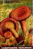 champi veneneux 8