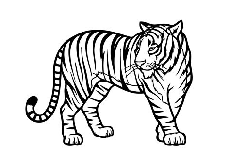 tiger wild animals coloring pages  kids printable