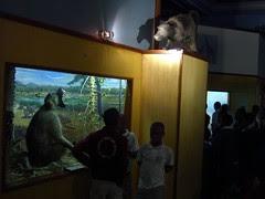 durban natural history museum - baboons