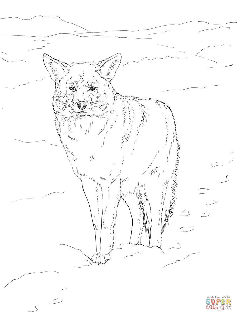 Coyote Portrait coloring page | Free Printable Coloring Pages