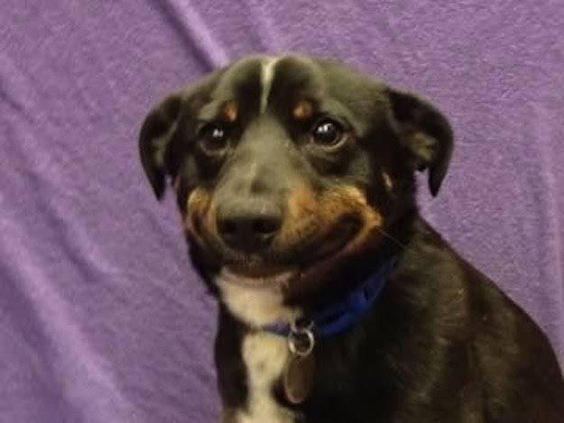 perro sonrisa forzada