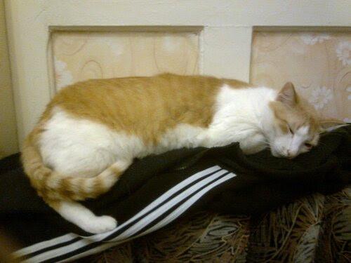 Сладко-сладко спит котейко на хозяйской кофте...
